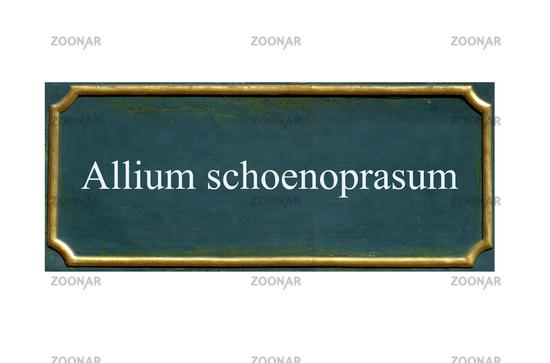 shield allium schoenoprasum