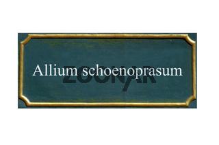 schild Schnittlauch
