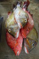 Frisch gefangene Fische zum Verkauf, Fischmarkt im Sir Selwyn Se