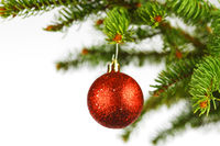 Red christmas ball on fir