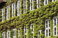 Hanover - Facade greening in the old town