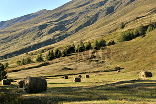 Gebirgsweide in den Französischen Alpen