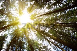 Sunlight in Forest.