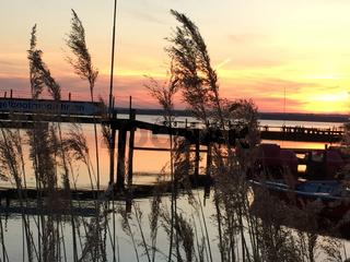Landschaft am Dümmer See-106