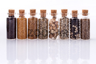 Assorted of spice bottles condiment  black pepper ,white pepper,  black mustard,white mustard,fenugreek,cumin and fennel seeds isolated on white background.