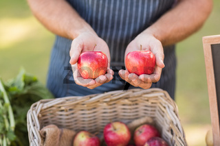 Farmer hands showing two red apples