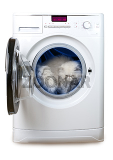 Cat in the washing machine