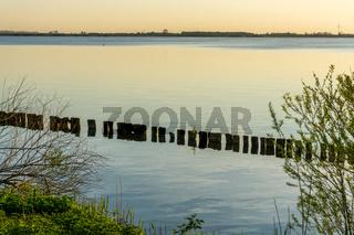 Landschaft am Dümmer See-88