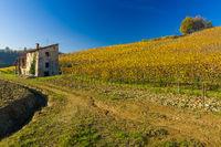 Vineyard hills in Autumn