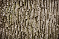 Close up of a tree trunk background
