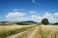 Feldweg führt durch Getreidefeld
