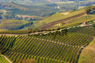 View on autumnal vineyards in Italy.