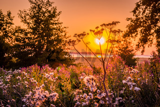 Sunrise over a meadow