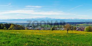 Frühlingswiese am Gehrenberg bei Markdorf