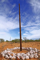 Vor Elefanten geschützter Strommast, Namibia, energy pylon with protection against elephants, Namibia