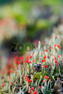 Green with red moss
