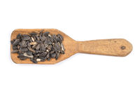 Vogelfutter - Bird seed on shovel