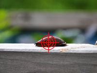 Zielen auf Nacktschnecke im Garten - Aim at slug in garden