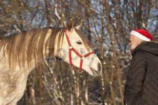 Araberpferd und Weihnachtsmann