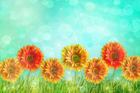 Colorful gerbera flowers against abstract background