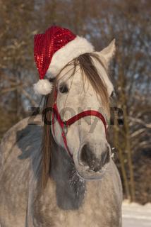 Weihnachtspferd im Schnee