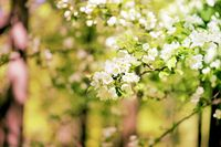 Spring flowers on the tree