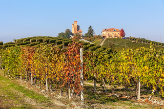 Colorful vineyards in Piedmont, Italy.