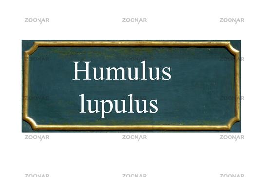 shield humulus lupulus