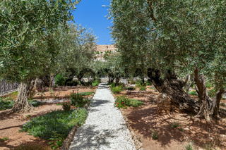 Gardens of Gethsemane in Jerusalem.