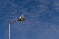 2 seagulls sitting against a blue sky on a street lamp