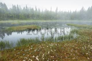 Morgennebel ueber einem Sumpfsee, Lappland