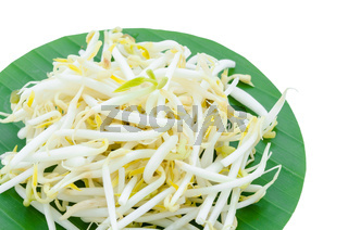 The Mungbean Sprouts.