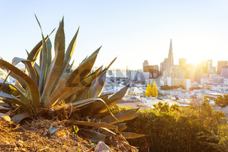 plant with cityscape of San Francisco in sunny day