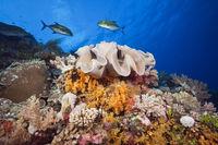 Buntes Korallenriff, Australien
