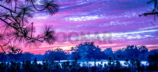abstract sunrise landscape on the farm in florida