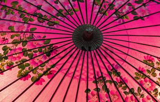 Japanischer Ölpapier-Schirm mit Kirschblütenmotiv