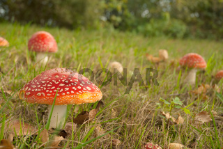 Mushroom red with white dotts