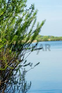 Landschaft am Dümmer See-152