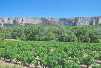 Vineyard Landscape in Provence,France
