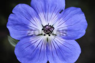 bewohnte Blüte
