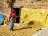 Woman shoveling rice in Bungamati