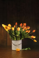 Tulips in old bucket