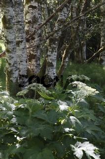 Bäume im Sol Duc Valley