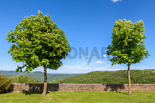 Two trees on the lawn under blue sky.
