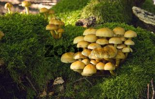 Mushroom Kingdom .