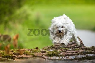 Sprung auf den Baumstamm