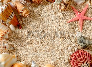 Sea shells and star fish on the sea pebbles