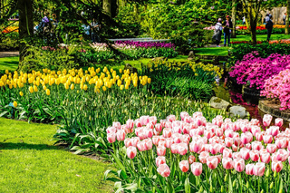 Keukenhof - Largest flower garden in Europe