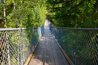 Hängebrücke bei den Cracy Creek Falls