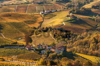 Colorful autumnal vineyards of Piedmont.